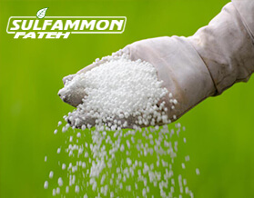 What is Ammonium Sulfate